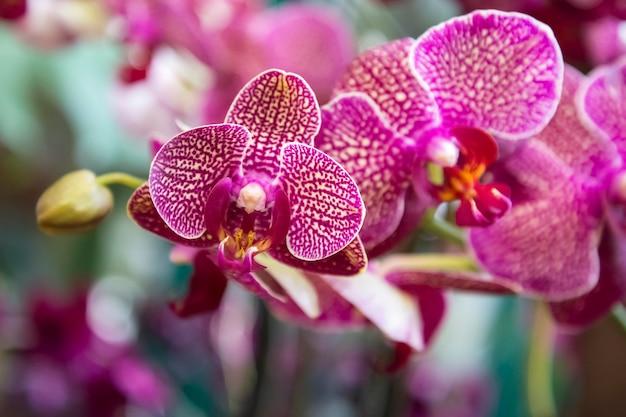 Orchideenblüte im tropischen garten phalaenopsis orchideen blumenoberfläche