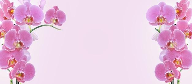 Orchideenblüten auf rosa oberfläche