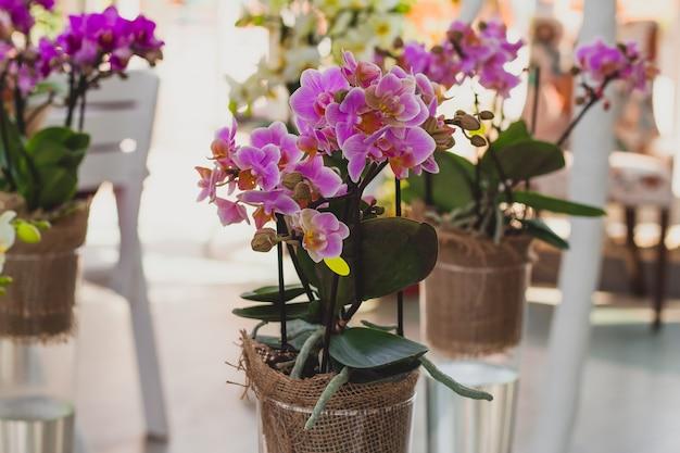 Orchideenblüten in transparenten glasvasen