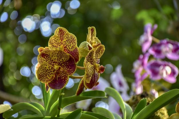 Orchideenblume im garten am winter