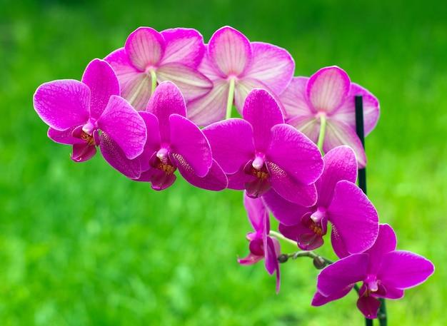 Orchideenblume mit grün