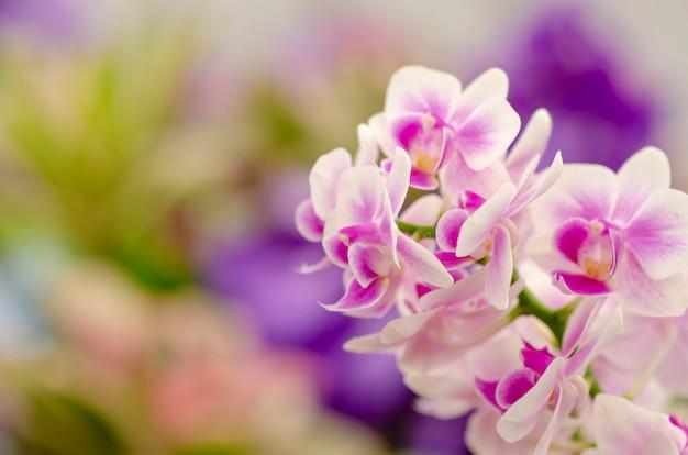 Orchideenmusterhintergrund verwischt