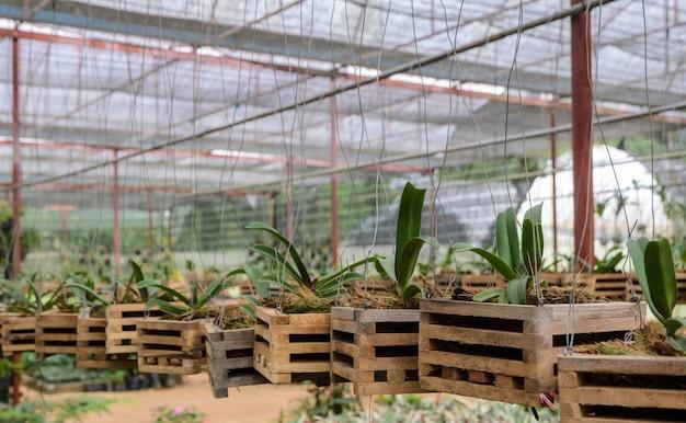 Orchideenpflanzen in einer kindertagesstätte