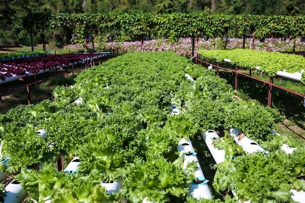 Organische salatplatte.