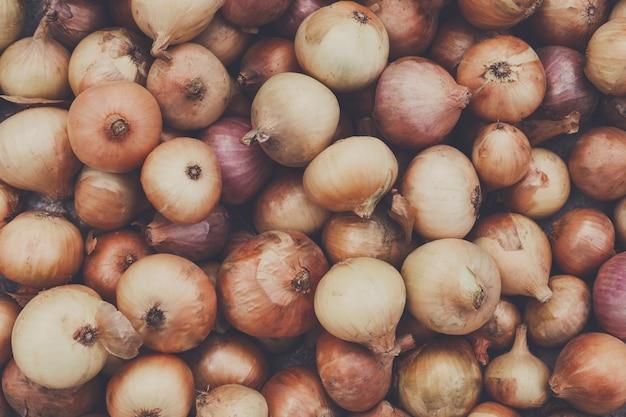 Organische zwiebel erfasst am ökologischen bauernhof