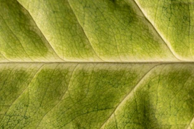 Organischer hintergrund der grünen blattnahaufnahme