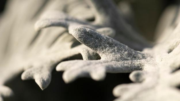 Organischer hintergrund der nahaufnahmekoralle