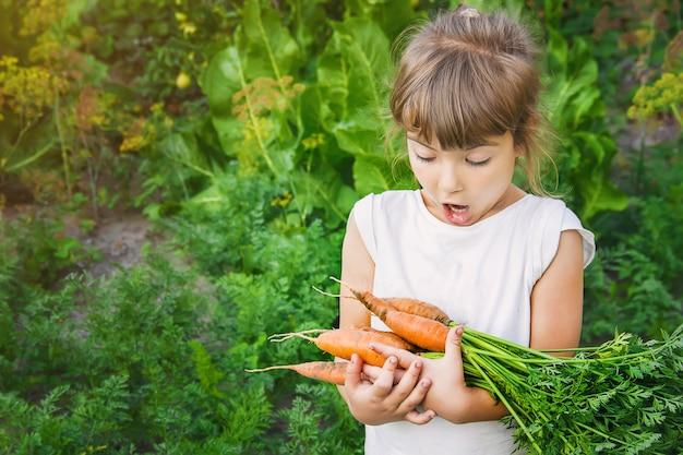 Organisches hausgemachtes gemüse erntet karotten und rote rüben