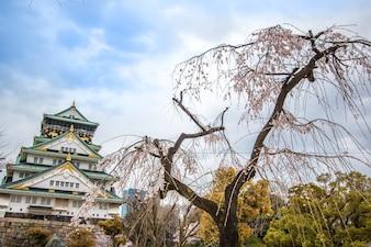 Osaka Castle und Kirschblüte blühen in Osaka, Japan.