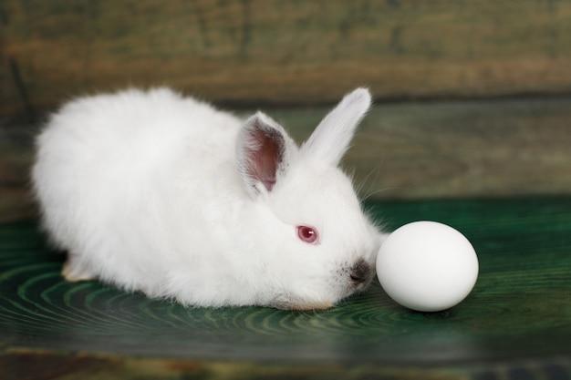 Osterei und kaninchen auf einer holzoberfläche. seitenansicht