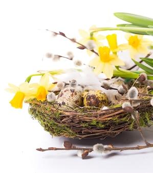 Ostereier im nest mit narzissen