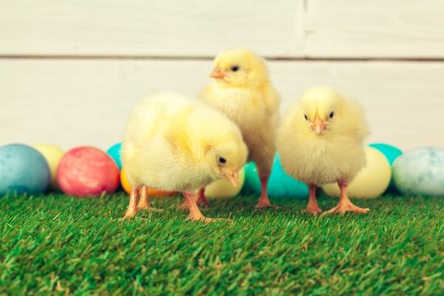 Ostereier und hühner auf grünem gras