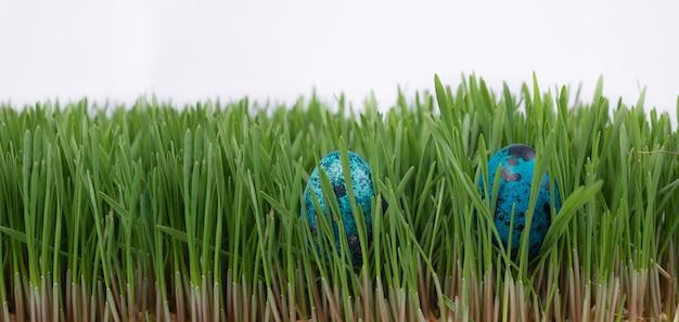 Ostereiersuche. ostern. auf der suche nach ostereiern im gras. im frühlingsgras liegen zwei bunte ostereier