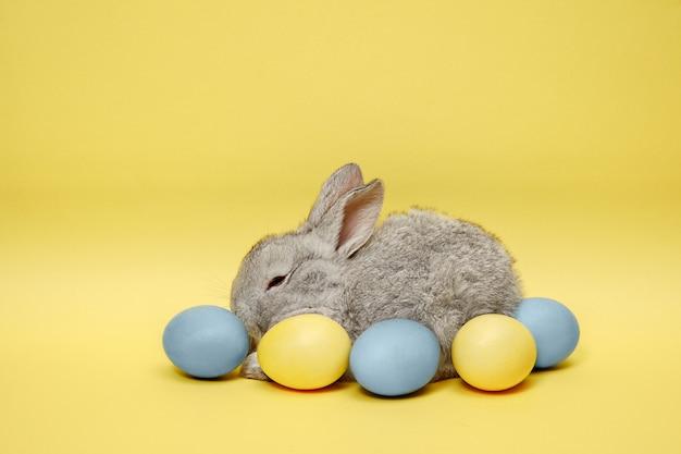 Osterhase kaninchen mit gemalten eiern auf gelber wand