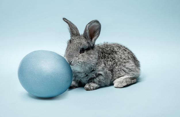 Osterhasen kaninchen mit blau gemaltem ei auf blau