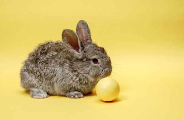 Osterhasen kaninchen mit gemaltem ei auf gelber wand
