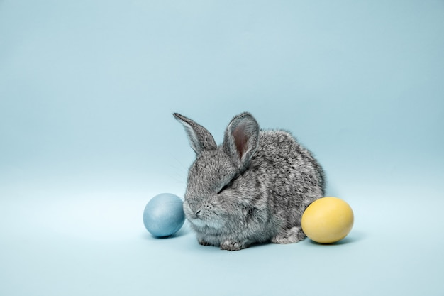 Osterhasen-kaninchen mit gemalten eiern auf blauem hintergrund. oster-, tier-, frühlings-, feier- und feiertagskonzept.