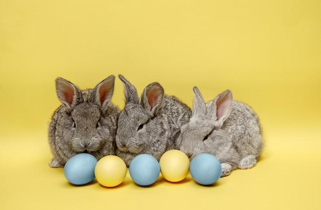 Osterhasen-kaninchen mit gemalten eiern auf gelber wand