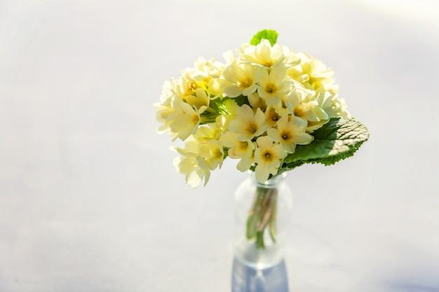 Osterkonzept. strauß der primelprimula mit gelben blumen in der glasvase auf weißem hintergrund. inspirierender natürlicher blühender frühling oder sommer blühender hintergrund. speicherplatz kopieren.