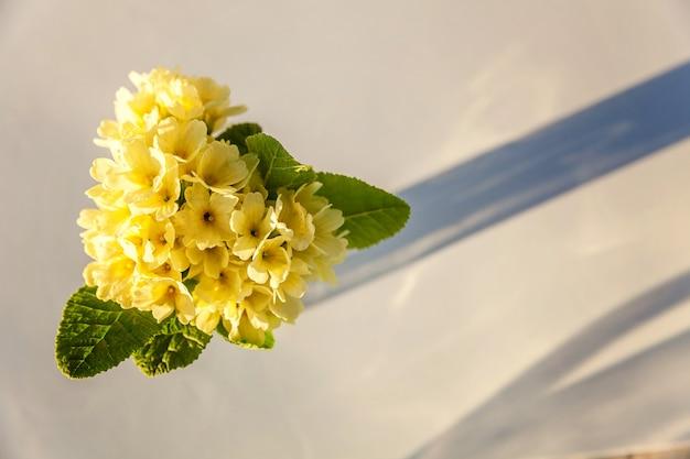 Ostern-konzept. blumenstrauß der primel primel mit gelben blumen im glasvase