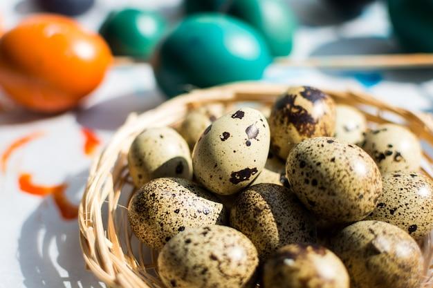 Ostern wachtel und regelmäßige farbige eier