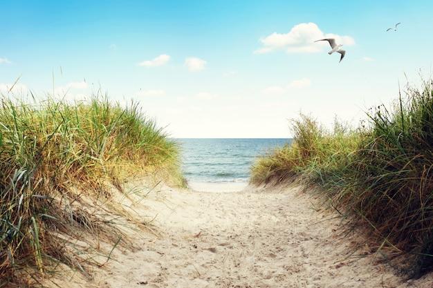 Ostseestrand mit dünen und meerblick. urlaub-hintergrund.