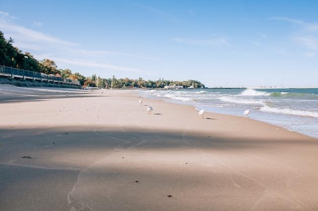 Ostseestrandlandschaft mit blauem seeweißsand und -seemöwe. sonniger herbsttag.