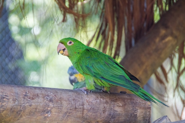 Outdoor-papagei in einem park in rio de janeiro, brasilien.