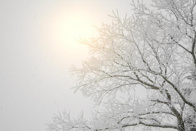 Outdoor-schönheit hoarfrost hintergrund saison
