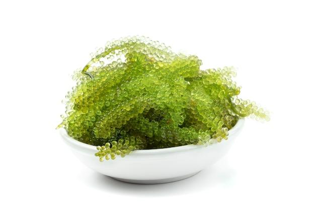 Oval meerestraubenmeerespflanze, abschluss oben grüner kaviar lokalisiert auf weißem hintergrund