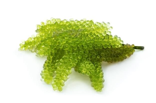 Oval meerestraubenmeerespflanze, abschluss oben grüner kaviar lokalisiert auf weißem hintergrund.
