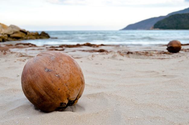 Ozean eine kokosnuss im hintergrund
