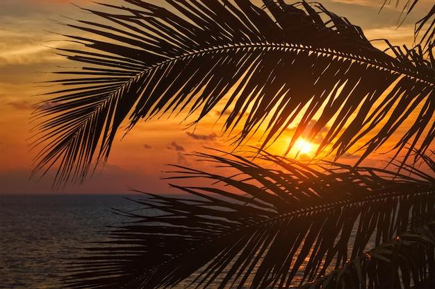 Ozean sonnenuntergang sichtbar durch palmblätter