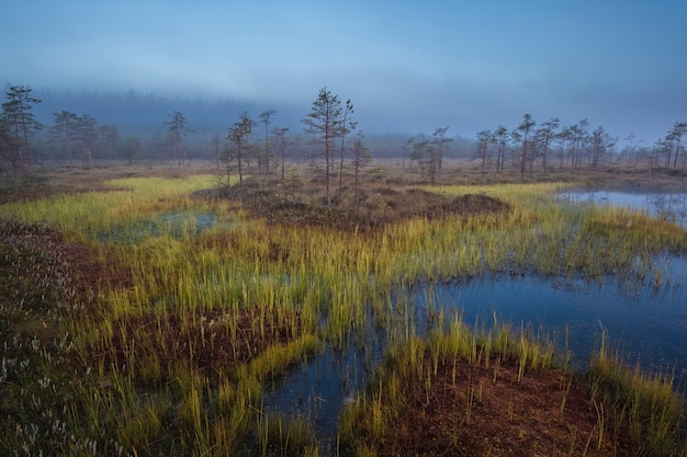 Ozernoye swamp national park im norden russlands