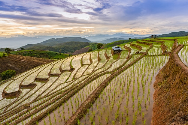 Pa bong piang rice terraces in der regenzeit, chaingmai, thailand