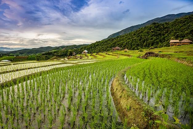 Pa bong piang rice terraces in der regenzeit, chaingmai, thailand