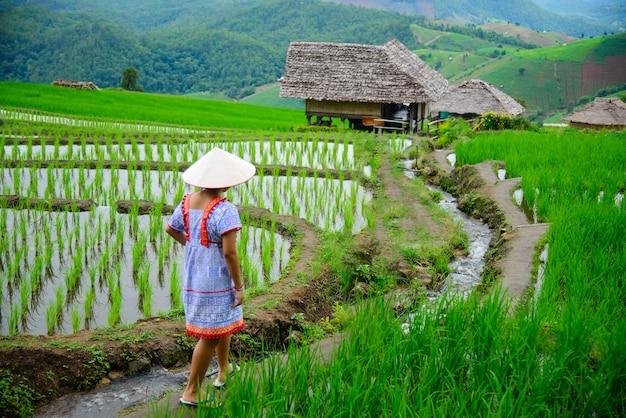Pa pong piang reisterrassen im norden von chiangmai thailand.