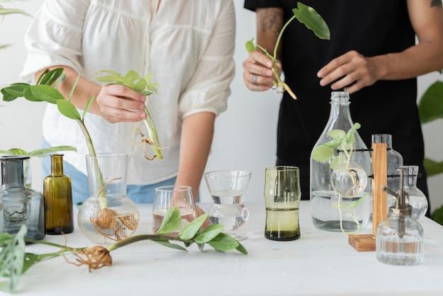 Paar, das gemeinsam als hobby seine zimmerpflanzen vermehrt