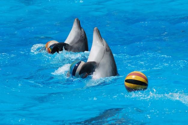Paar delfine, die im pool mit bällen tanzen