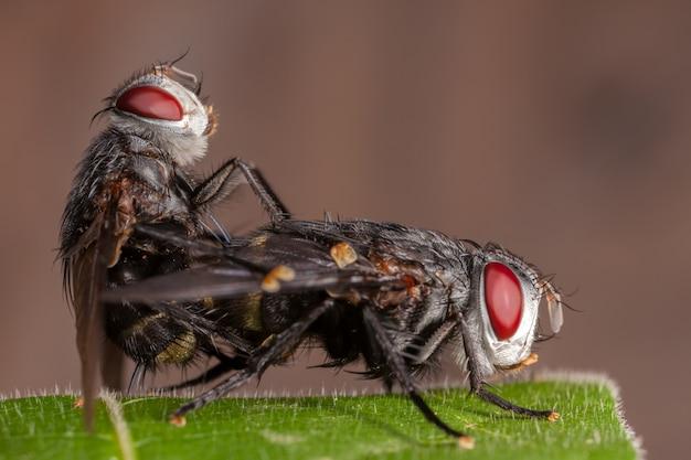 Paar fliegt auf blatt