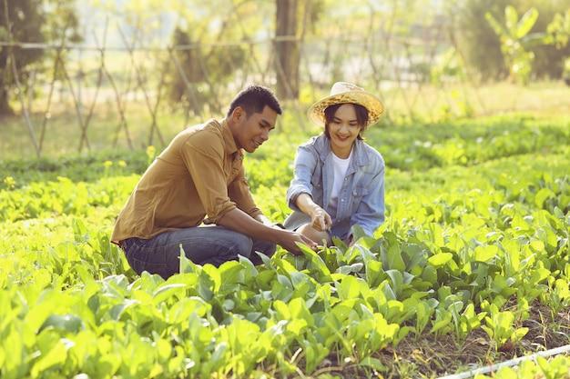 Paar landwirte kümmern sich um die umwandlung von bio-gemüse. paare sind glücklich, gemüse anzubauen, das sicher zu verkaufen ist.