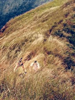 Paar-trekking-aktivität, die berg wandert