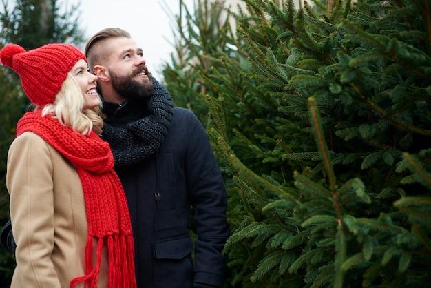 Paar wählt den perfekten weihnachtsbaum