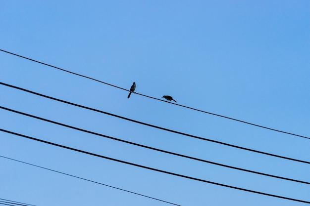 Paare der vögel, die auf dem schwarzen stromkabel mit klarem blauem himmel im hintergrund sitzen.