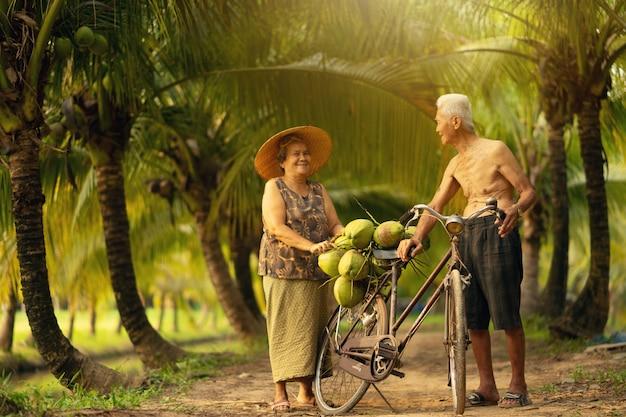 Paare des altersmannes und -frau, die kokosnuss im kokosnussbauernhof in thailand sammeln.