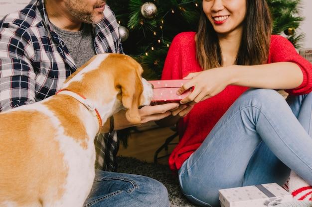 Paare, die weihnachten mit ihrem hund feiern
