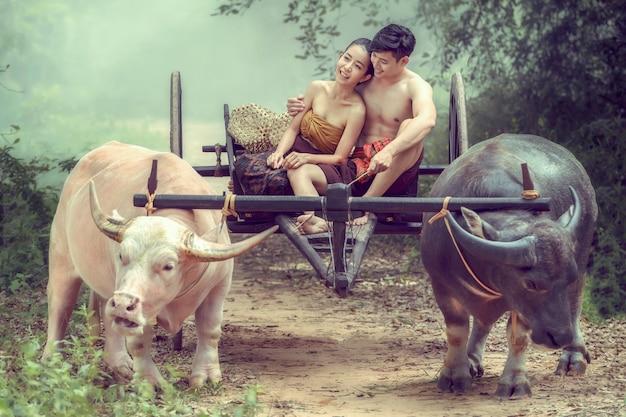 Paare im alten thailändischen kostüm sitzen auf einem büffelkarren.