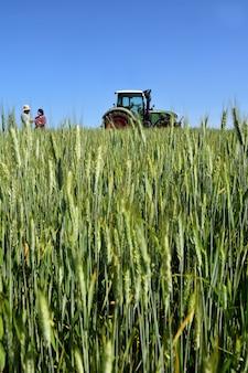 Paare von landwirten auf einem weizengebiet mit einem traktor