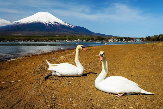 Paarschwäne entspannen sich nahe see yamanaka mit mt. fuji-ansicht, yamanashi, japan.