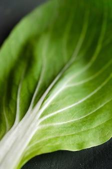Pak-choi-pflanze auf grünem hintergrund